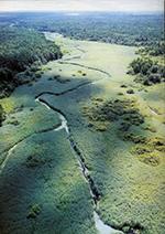 Беловежская пуща - фото сверху