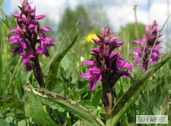растения беловежской пущи