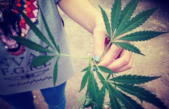 В Сербии можно будет купить марихуану легально?