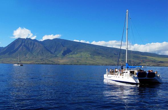 На Гавайях предлагают годовую гарантию на китовые сафари
