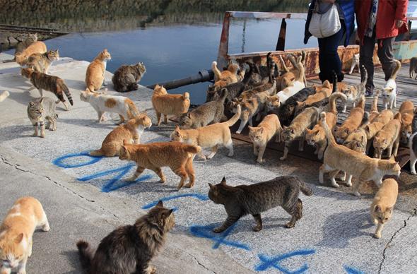 В Японии стал известным еще один остров кошек