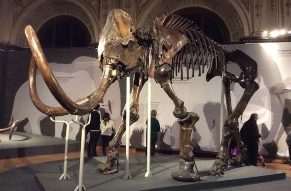 Выставка мамонтов в Вене