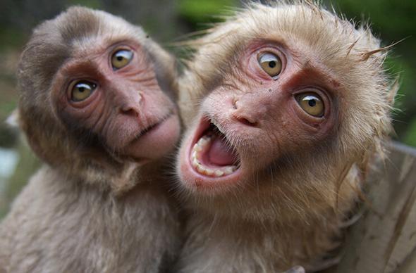 В индийском аэропорту Ченнаи 3 дня ловили обезьян
