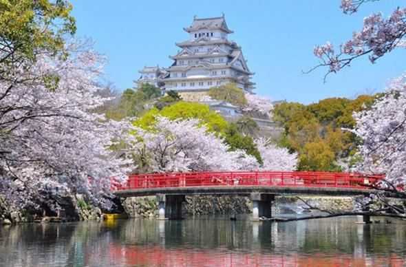 Через неделю в Японии и Корее начнется период цветения сакуры
