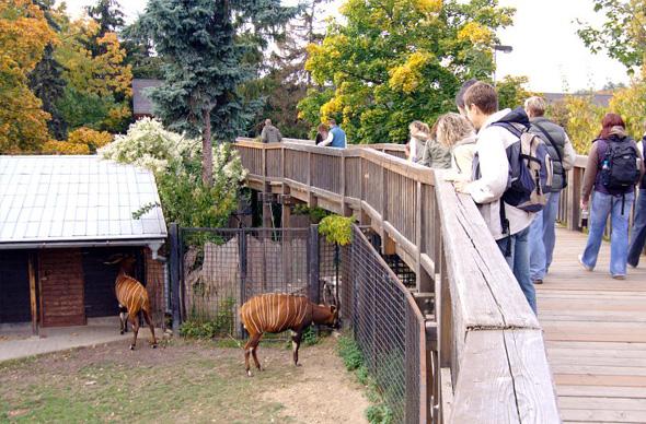 Зоопарк в Праге занял 4-е место в мировом рейтинге, первым стал San Diego Zoo