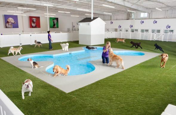 В аэропорту Кеннеди в Нью-Йорке открылся терминал для животных